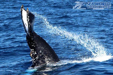 'Tis the Season to Watch the Whales!