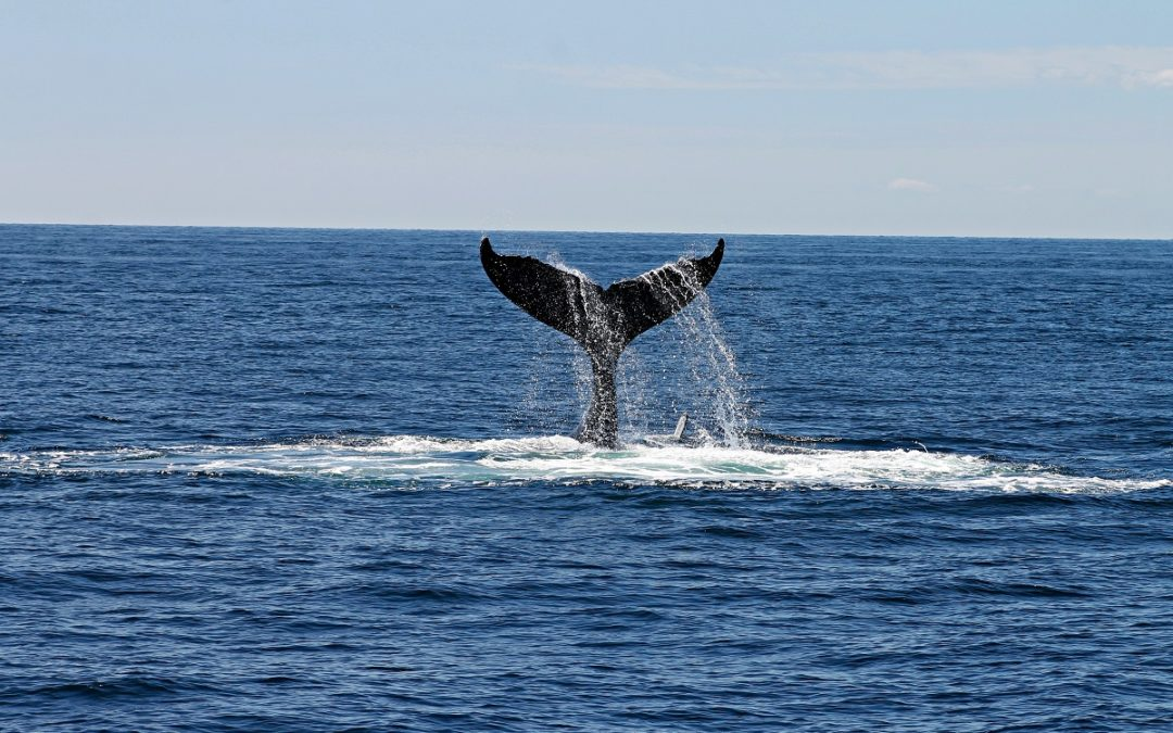 Free Whale Watching on the Gold Coast? Here's How